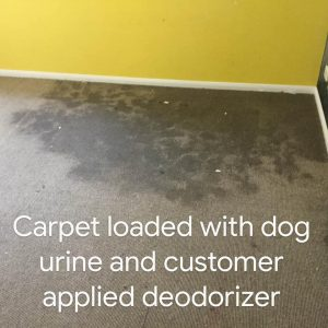a good example of what pet urine really does to your home…