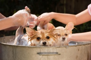 You Can Keep Your Home Free of Pet Odors